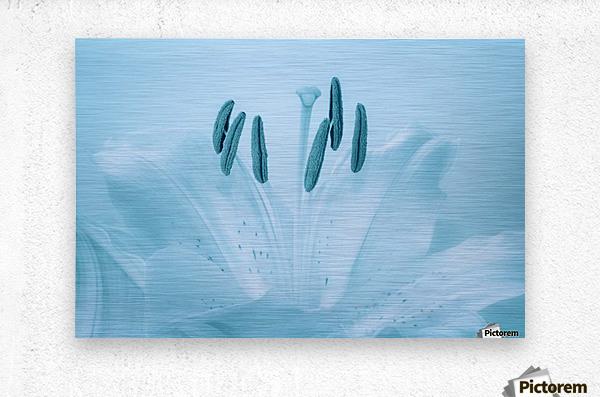 Blue Lily  Metal print