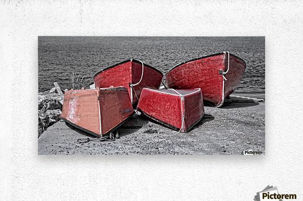 Red Dorries  Metal print