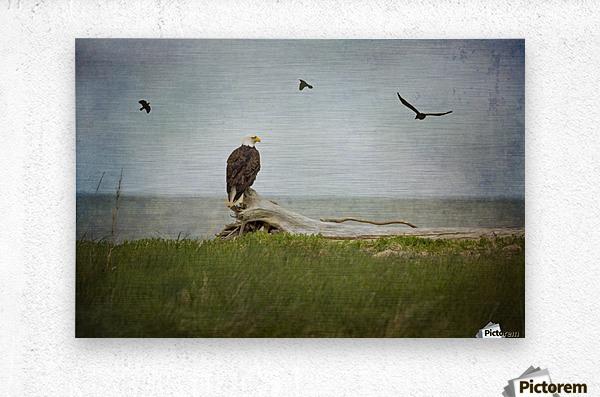Bald Eagle on Tree Trunk  Metal print