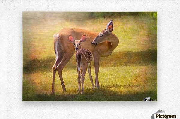 Doe with fawn looking back  Metal print