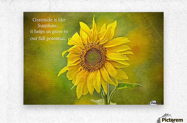 Gratitude is Like Sunshine  Metal print