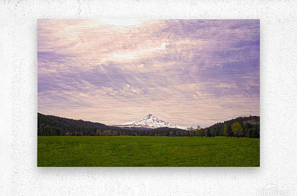 Mount Hood Bathed in Golden Rays at Sunset  Metal print