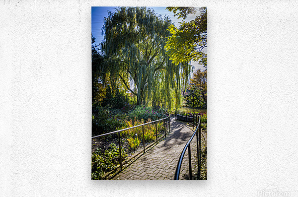 Drape of Trees  Metal print