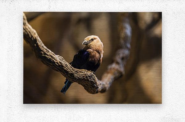 Perfect Pose  Bird   Metal print