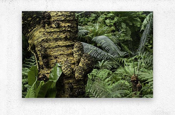 Trees Textures  Metal print
