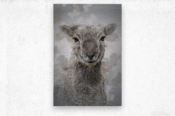 Mouflon  Metal print