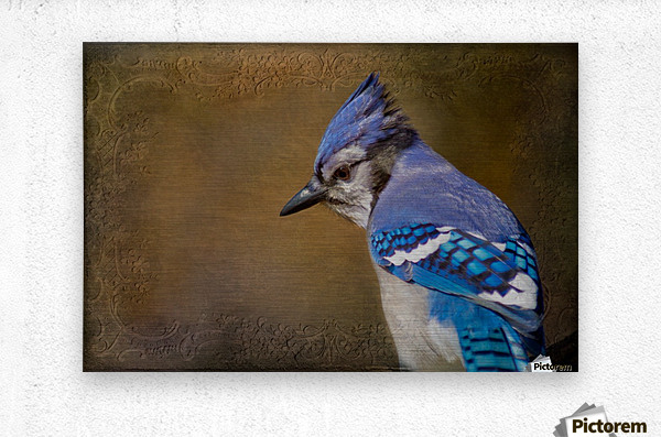 Blue Jay with texture  Metal print