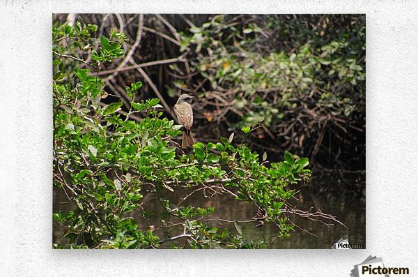 Tropical Bird in Tree  Metal print