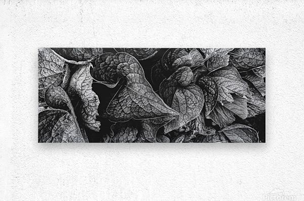 Garden Leaves  Metal print