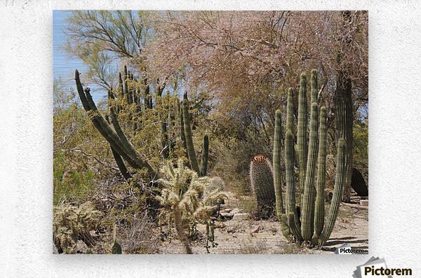 Cactus Garden  Metal print