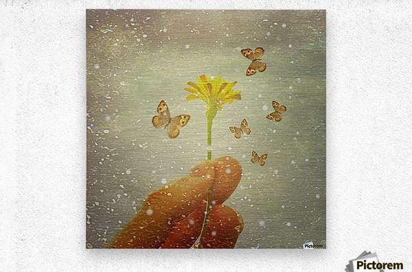 Butterflies Charmer  Metal print