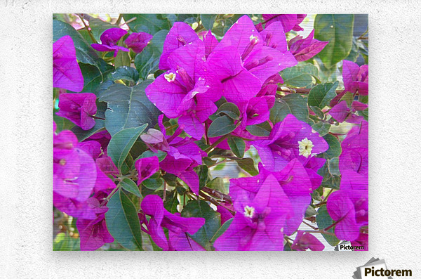 Purple Fusion  Metal print