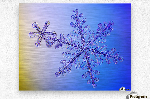 Photomicroscopic close up of two snowflake crystals, Alaska  Metal print