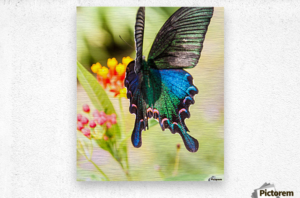 Butterfly not in the sky  Metal print