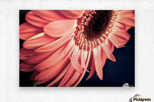 Gerbera flower background  Metal print