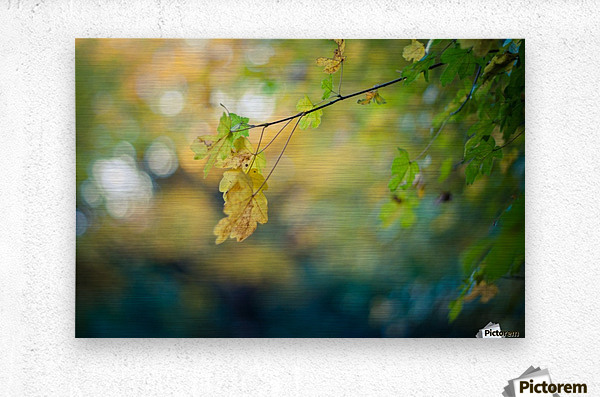 Beautiful autumn background  Metal print