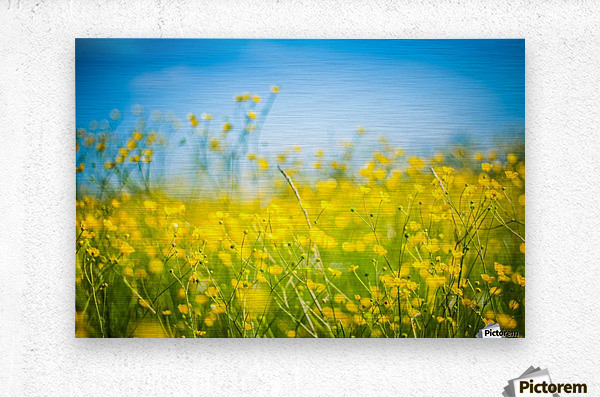 Summer flowers, yellow and blue  Metal print