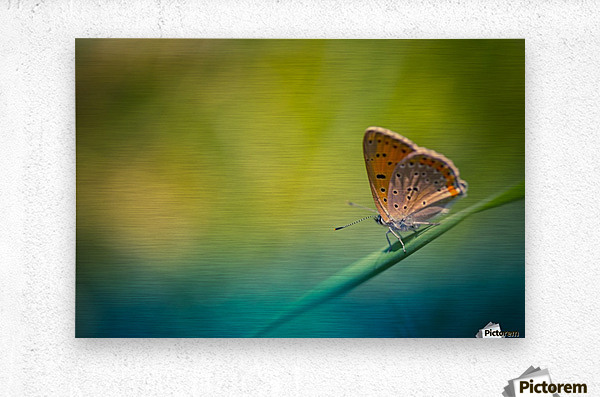 Beautiful summer background  Metal print
