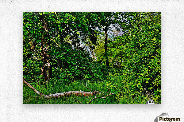 Life in the Shadows of the Trees  Metal print