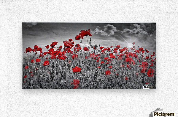 Idyllic Field of Poppies with Sun  Metal print
