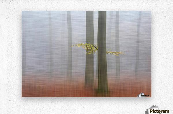 Autumnmorning  Metal print