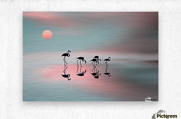 Family flamingos  Metal print