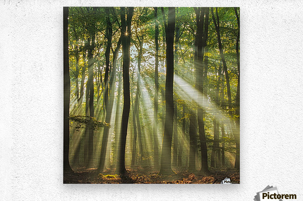 Sunny start to the day ........  Metal print