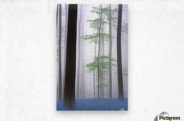 foggy forest ....  Metal print