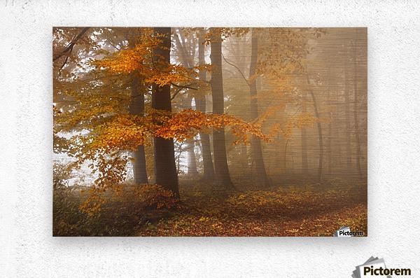 Edge of the woods  Metal print