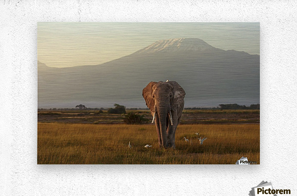 Under the roof of Africa  Metal print