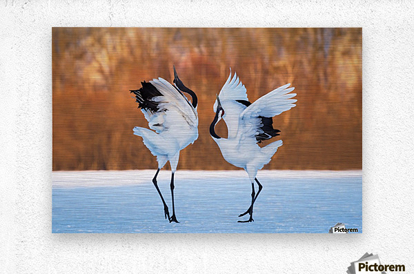 The dance of love  Metal print