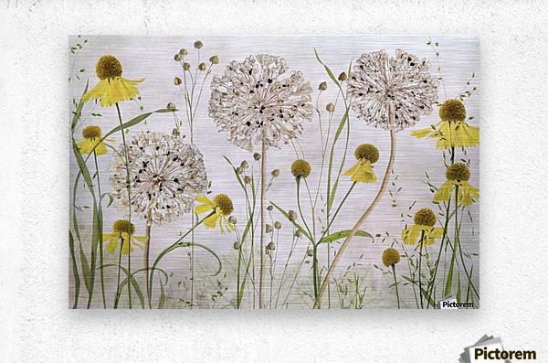 Alliums and heleniums  Metal print