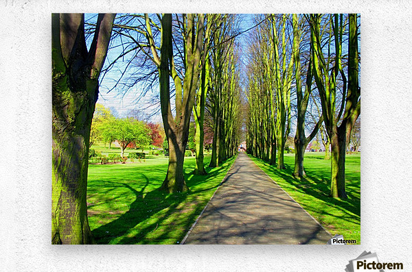 Summer Avenue  Metal print