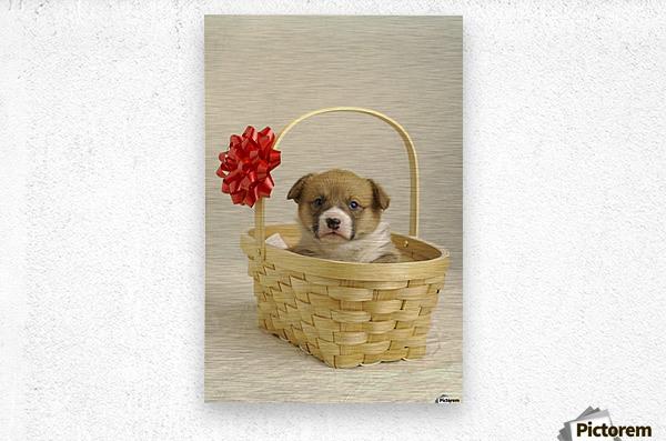 Puppy In A Basket  Metal print