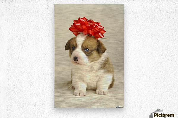 Puppy Wearing A Red Bow  Metal print