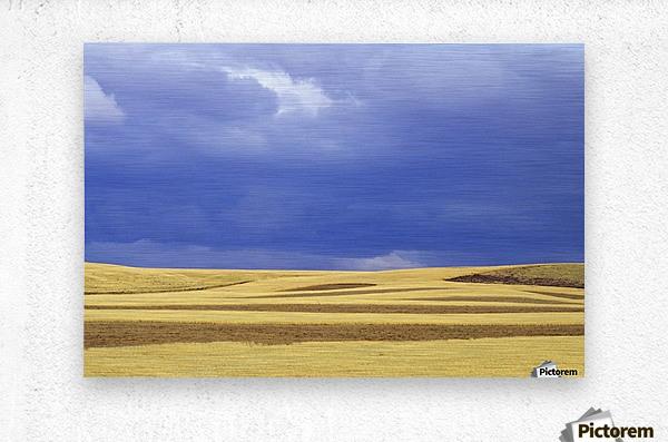 Wheat Fields Near Hermiston, Oregon, Usa  Metal print