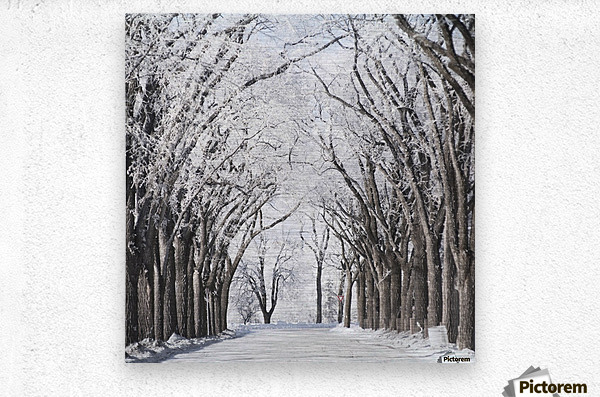Winnipeg, Manitoba, Canada; A Road And Trees Covered In Snow In Winter  Metal print