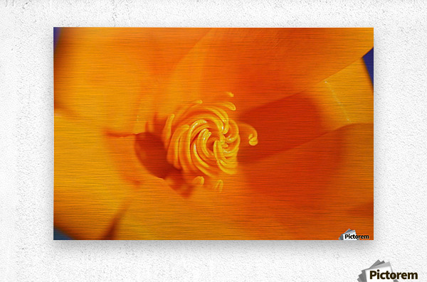 Close Up Of A Poppy Flower; Happy Valley, Oregon, Usa  Metal print