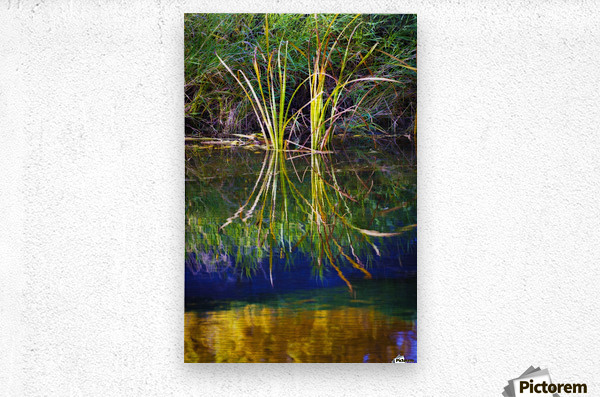 Reeds Reflecting On The Water; St. Albert, Alberta, Canada  Metal print