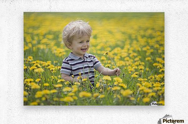 18-Month-Old Boy In Dandelion Field; Thunder Bay, Ontario, Canada  Metal print