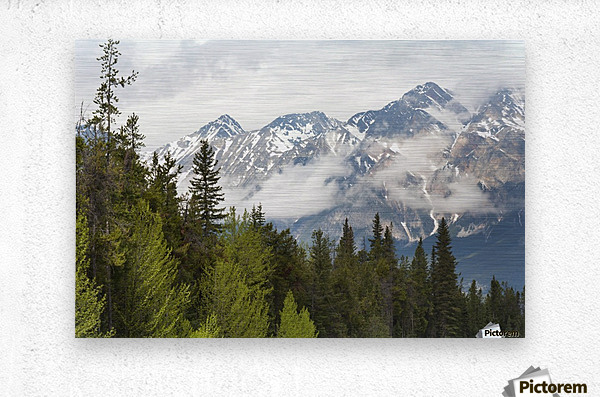 A Forest And The Rocky Mountains; Jasper, Alberta, Canada  Metal print