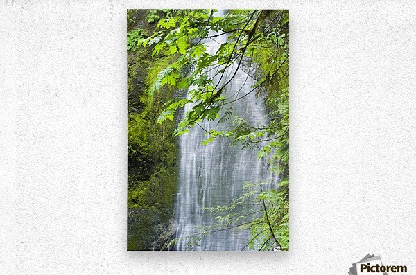 Marymere Falls, Olympic National Park  Metal print
