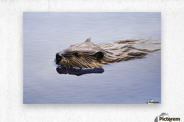 View Of Beaver, Chaudiere-Appalaches Region., Quebec, Canada  Metal print