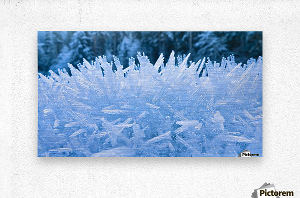 Close Up Of Hoar Frost Along The North Fork Of The Nooksak River During Winter, Mount Baker National Forest, Washington, Usa  Metal print