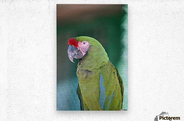 Close up of a parrot;Puerto vallarta mexico  Metal print