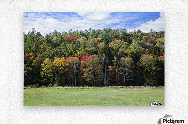Colourful trees in autumn; Woodstock, Vermont, United States of America  Metal print