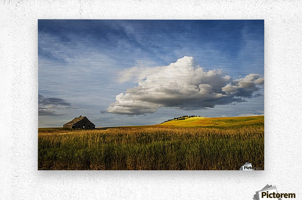 Wheat field and old wooden barn; Palouse, Washington, United States of America  Metal print