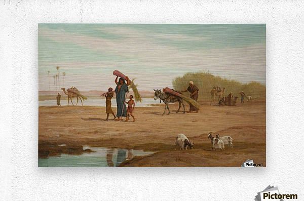 Getting in the Sugar Cane, River Nile  Metal print