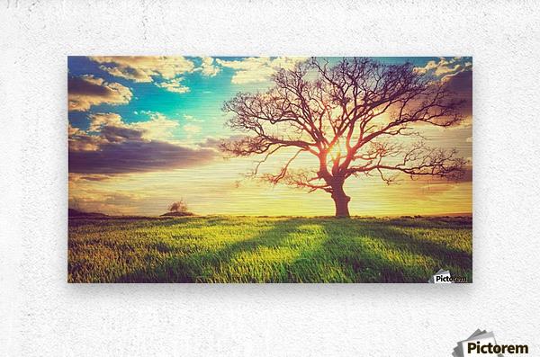 nature 05  Metal print
