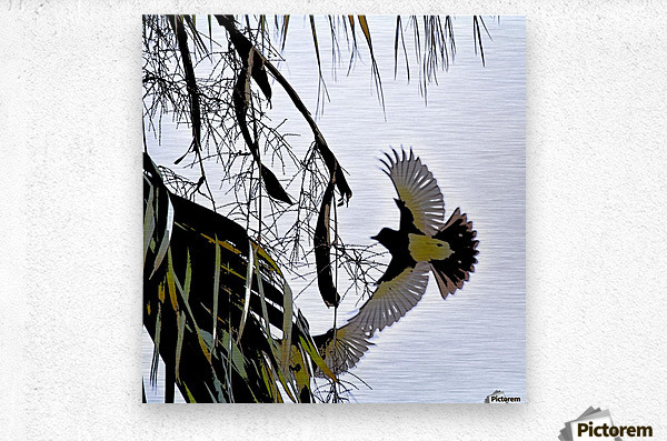 Orioles Abstract 1   Metal print